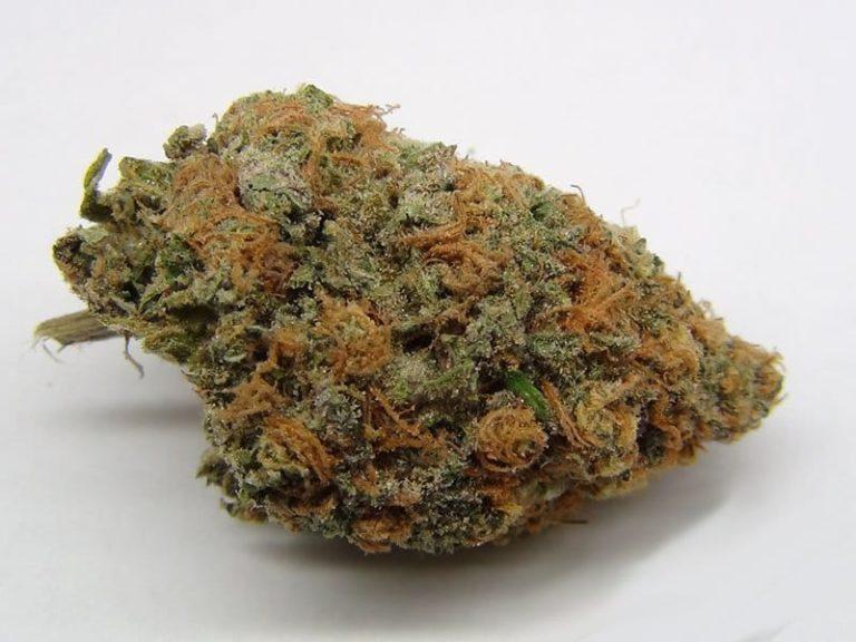 Purple-Kush-weed-strain