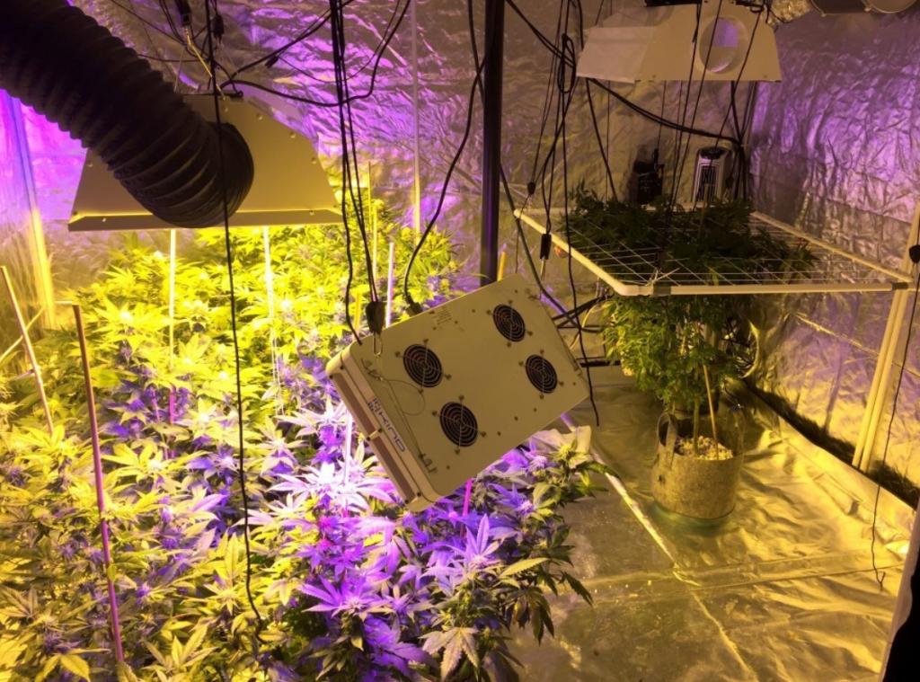 10x10 Grow Tent2