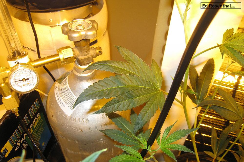 cannabis-co2