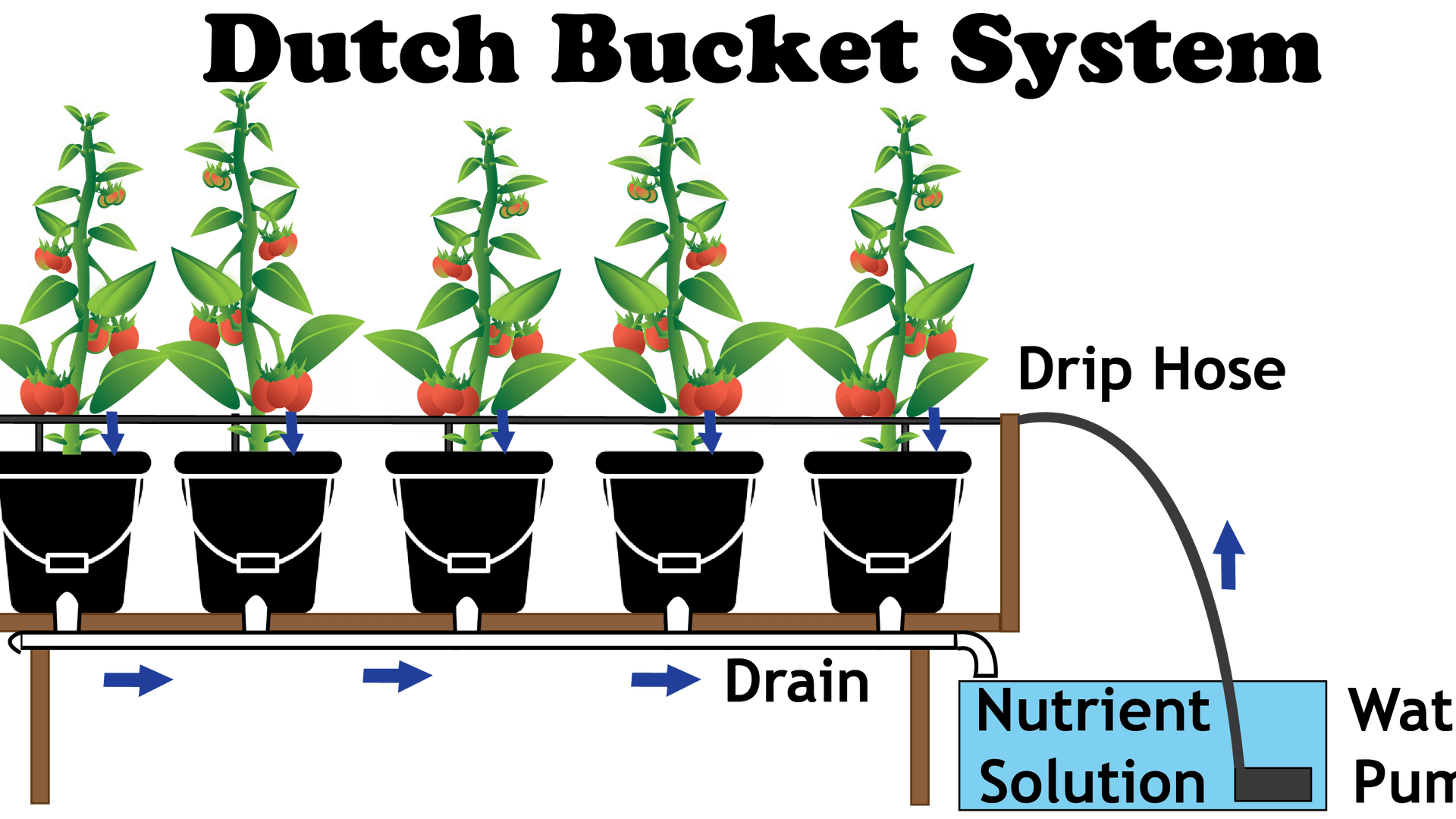 dutch-bucket-system