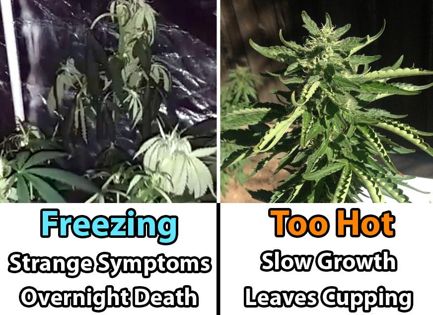 freezing-vs-hot-temperatures-cannabis-grow-room