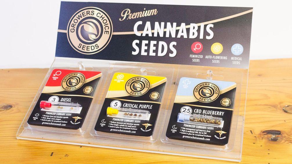 growers-choice-cannabis-seeds