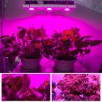 Best 200 Watt LED Grow Light Review