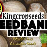Crop King Seeds (CKS) Reviews – Is This Seed Bank Reliable
