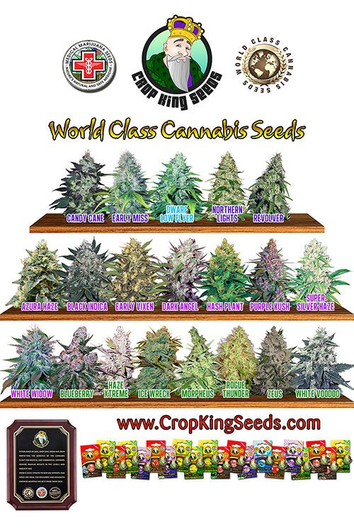 Crop-King-Seeds-strain