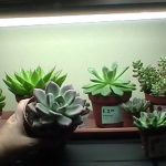 Best Led Grow Lights For Succulents