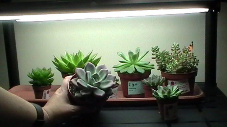 Succulent Grow Light