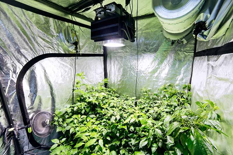 Ventilating the Grow room