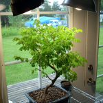 Best Grow Lights For Your Bonsai