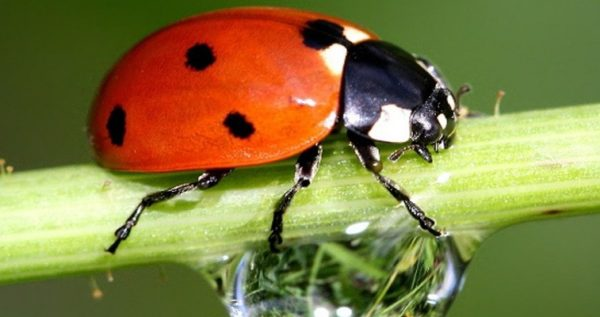 Pests-and-bugs-control-for-outdoor-marijuana