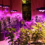 500W Led Grow Light Review