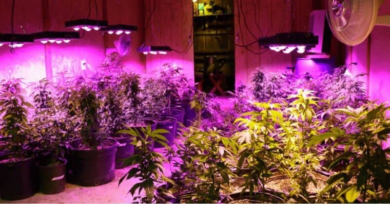 500 watt led grow light