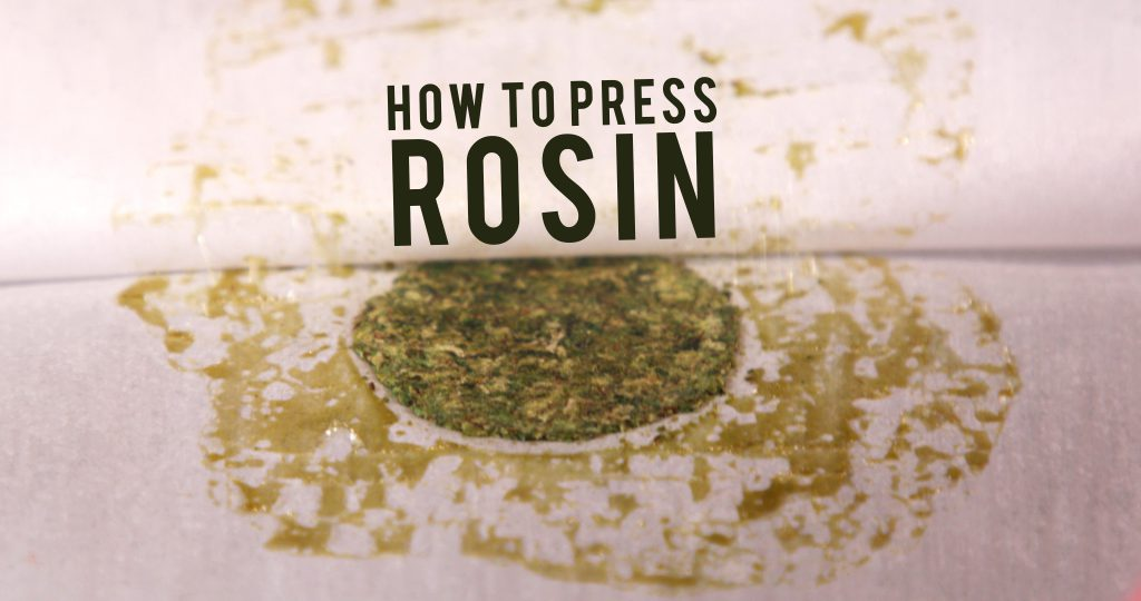 How To Press Rosin