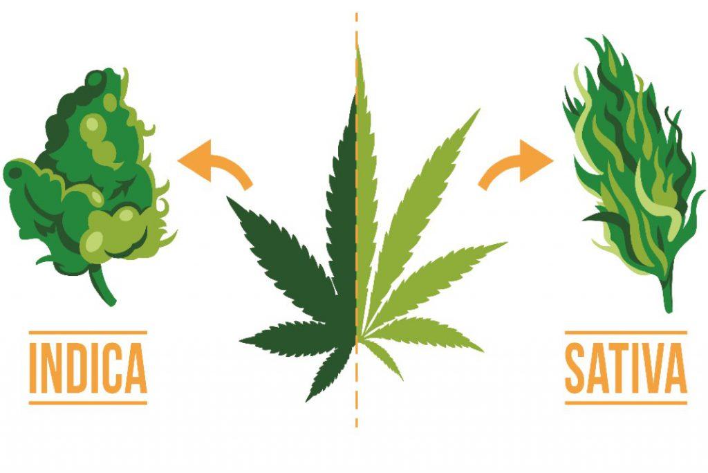 Indica vs Sativa