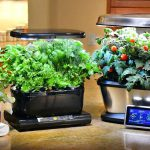 Aerogarden Reviews 2020 (All Models)