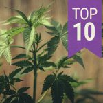 9  Marijuana Growing Tips To Grow Cannabis Successfully