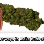 How To Make Your Weed Stronger