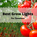 Best LED Grow Lights For Growing Tomatoes