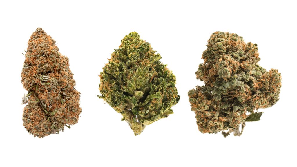 high CBD weed strains