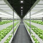 Best Indoor Greenhouse Grow Lights