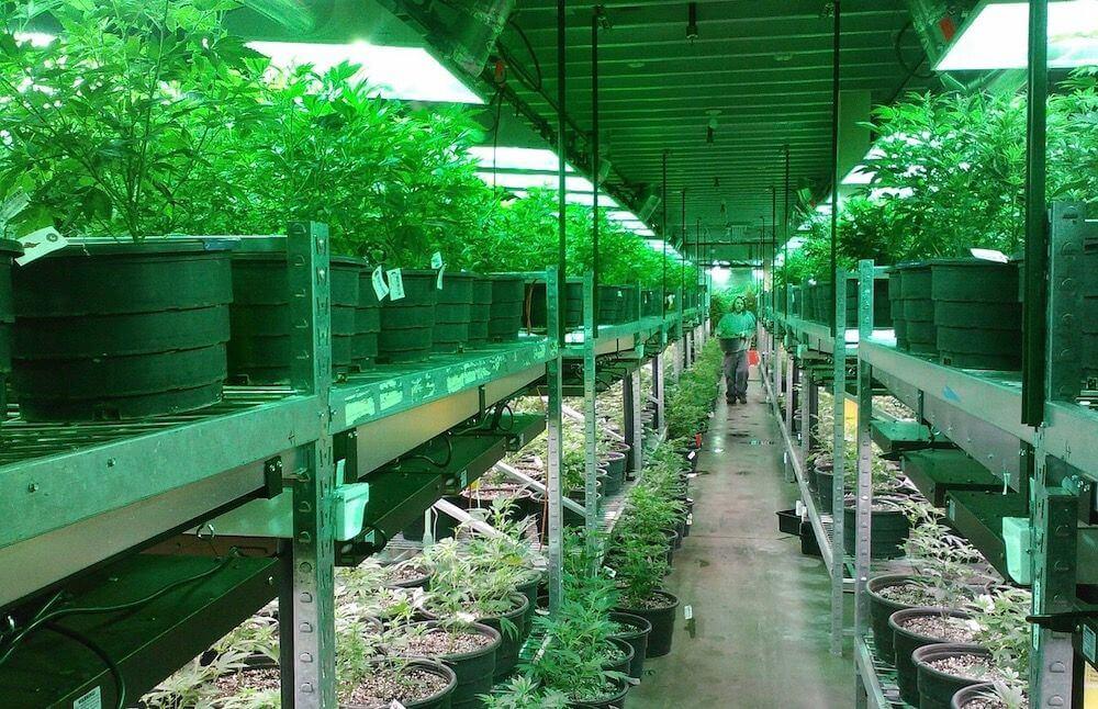 cannabis portable pots