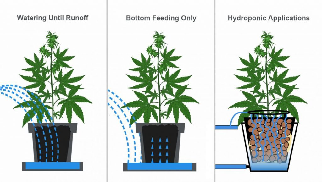 How Often Should I Water My Weed Plant