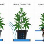 How Often Do I Water Marijuana Plants